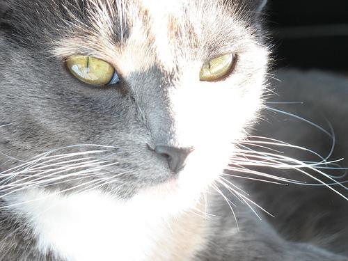 Cute Portrait of Fea