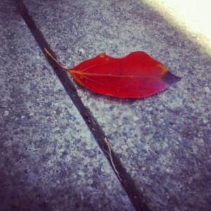 sexy_leaf